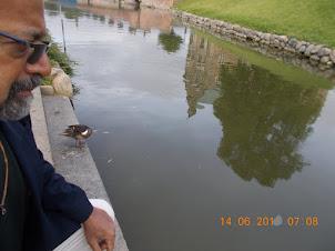 Reflection of Rosenberg Castle.in Kings Garden  pond.