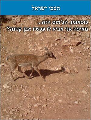 הצבי ישראל