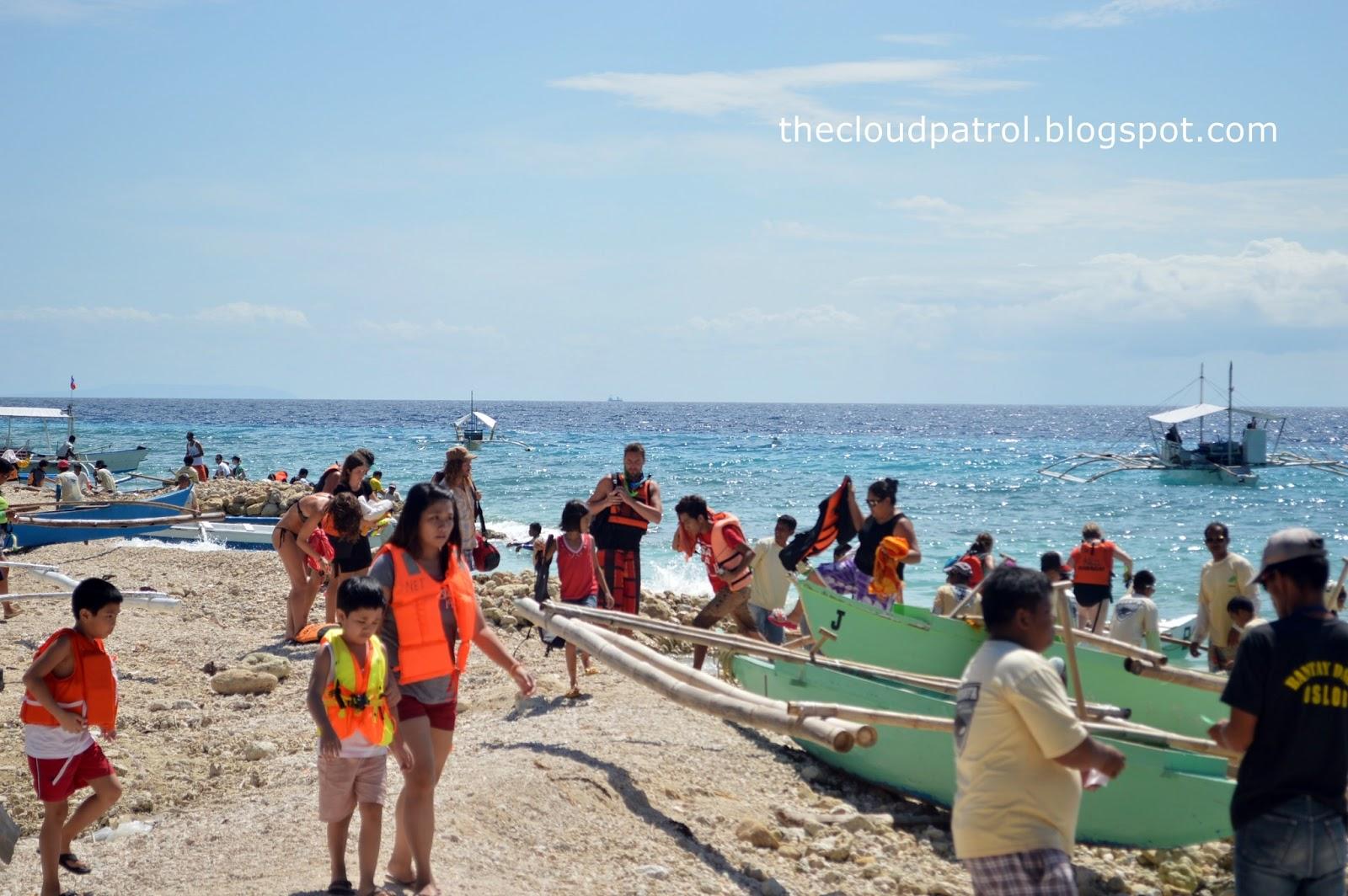 Butanding, whale shark, cebu, oslob, philippines, white sand, vacation, beach