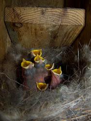 polls nascuts fa  3 o 4 dies