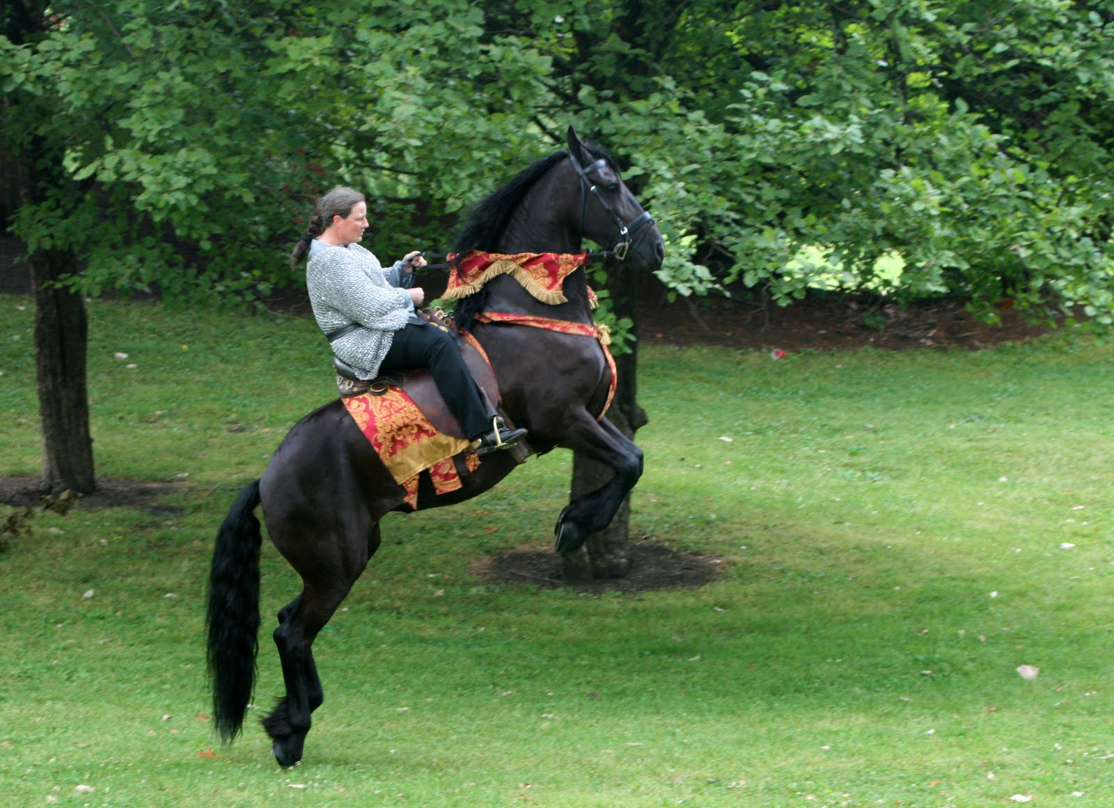 http://1.bp.blogspot.com/-1IaMEsu0HDQ/TnH8MJhsAlI/AAAAAAAAA5A/Dc9mI30lHYs/s1600/friesian+horse+%252824%2529.jpg