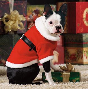 Perro+vestido+de+Santa+Claus Imagenes chistosas de perros navideño