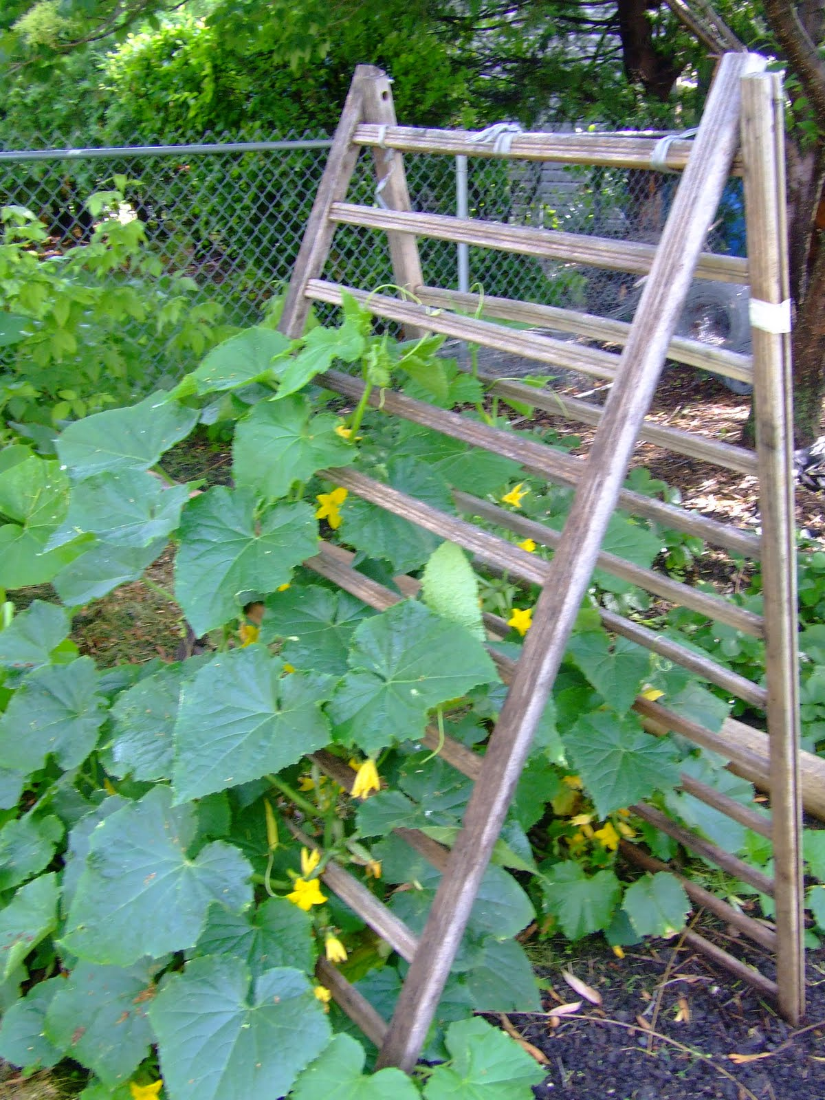 vertical gardening trellis training