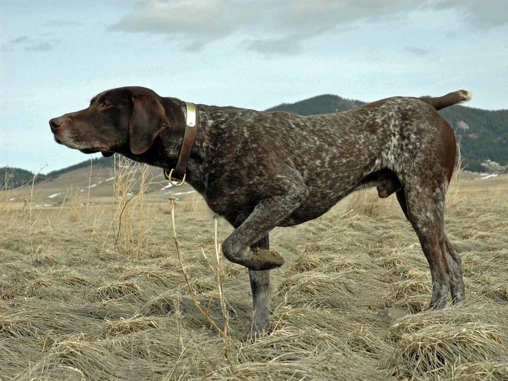 Helga Weaver: hunting