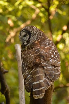 An owl at Maymont, Richmond, VA