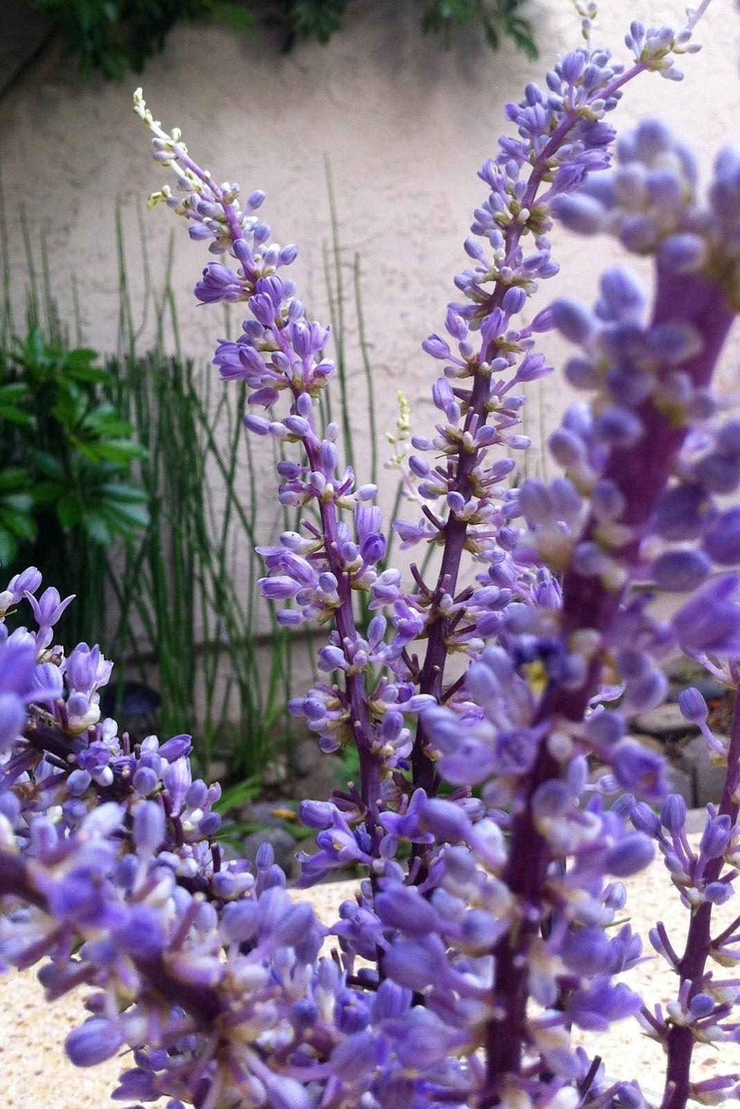 Mejia mamma another mason jar vase another mason jar vase i noticed these pretty little long stem purple flowers mightylinksfo