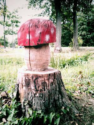 fungi,