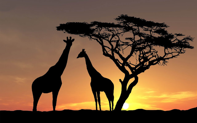 Giraffes wallpaper with the silhouette of giraffes and a tree at sundown