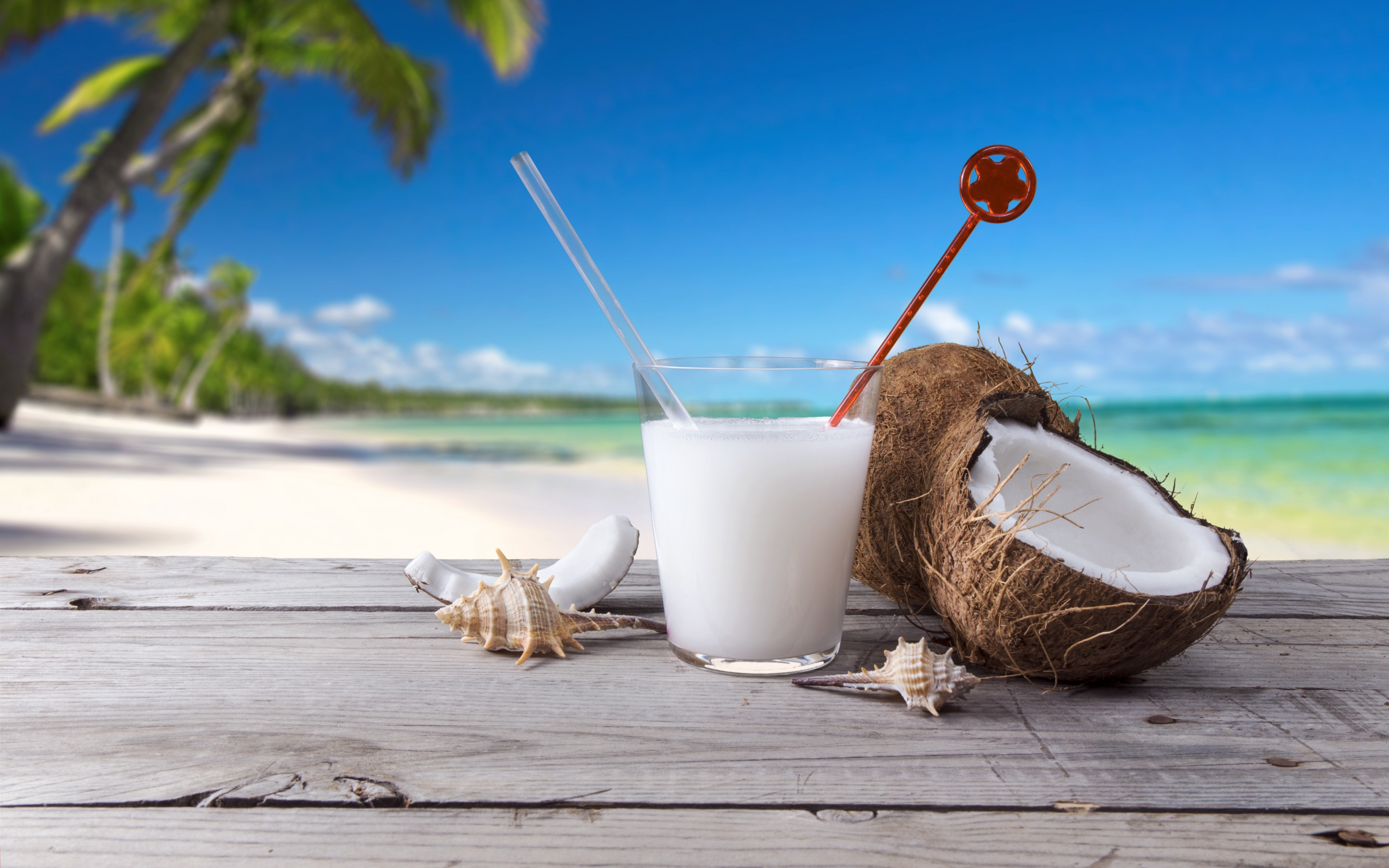 Coconut Drink Shells Beach Palm Trees Mystery Wallpaper