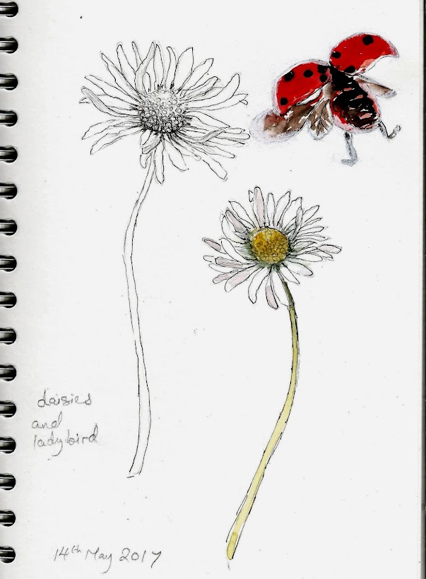 Daisies and Ladybird
