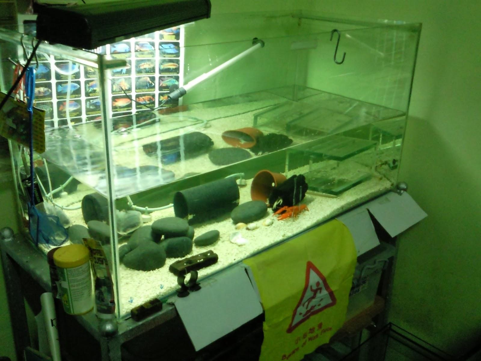 Home Fish Tanks : ... Fish Tanks And Aquarium CRS: Aquarium Home Multiple Fish Tanks Setup