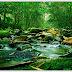 Pentingnya Ekosistem Sungai