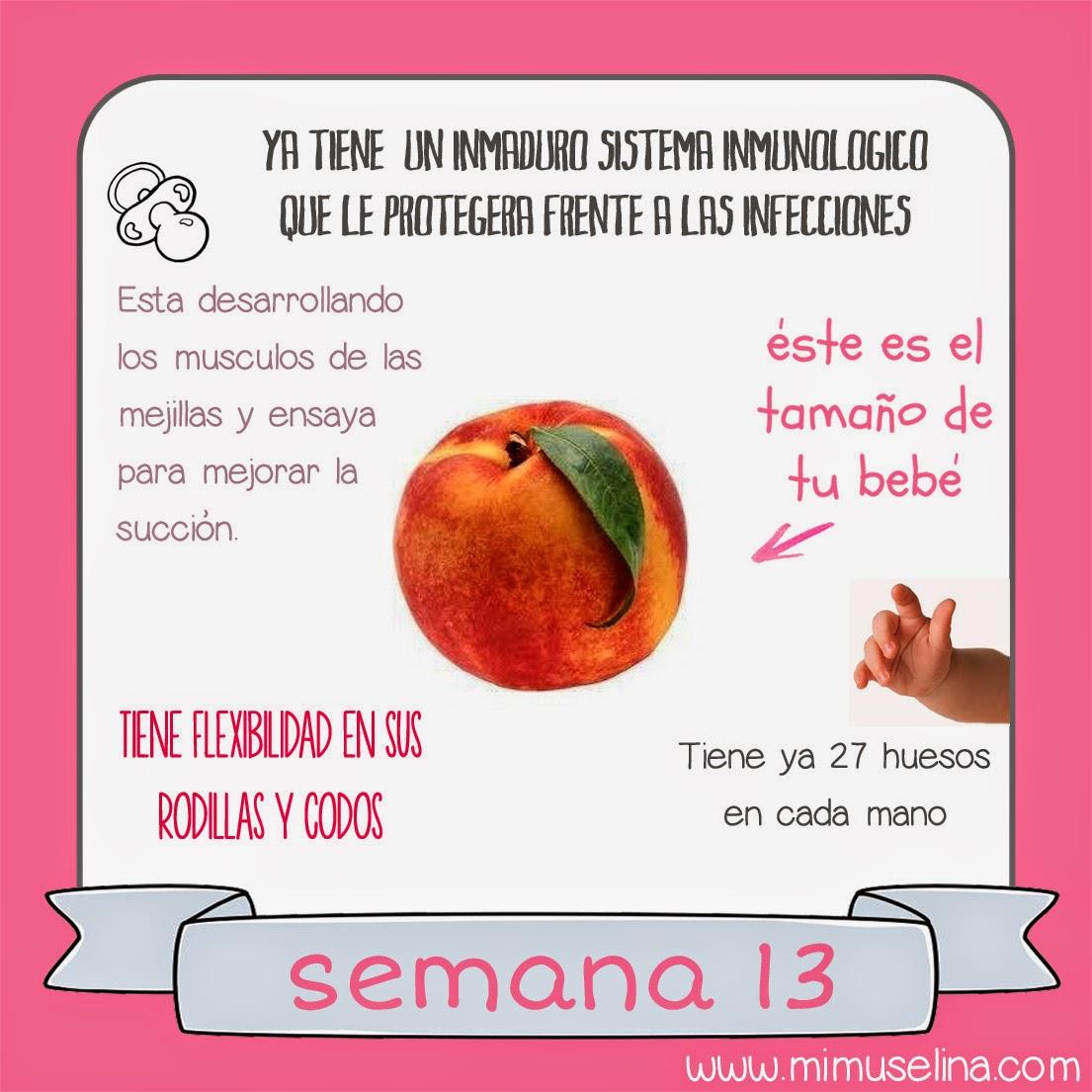 Semana 13 embarazo. Tamaño y evolución del bebé @mimuselina