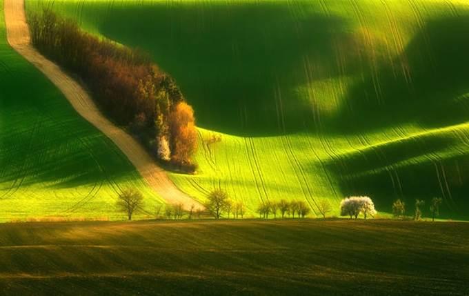 moravia green field