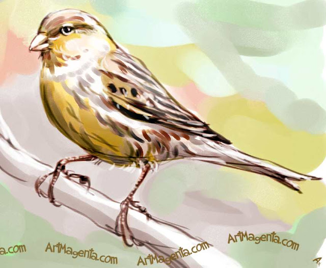 Canary sketch painting. Bird art drawing by illustrator Artmagenta
