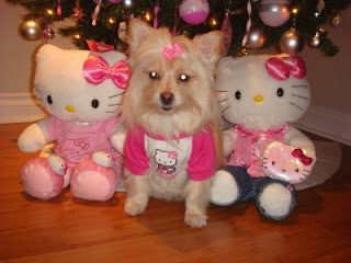 Dog with Hello Kitty plush soft toy at Christmas