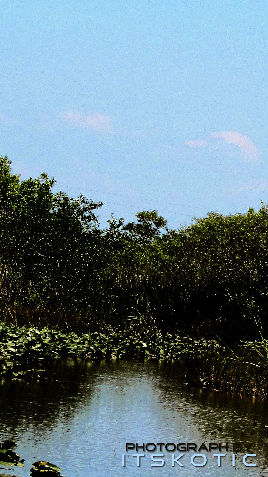 Florida Everglades Landscape On A Beautiful Day Picture image
