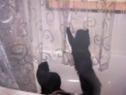 black cats in shower