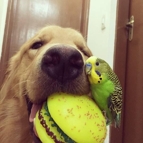 صداقة مدهشة طيور وهامستر حازت