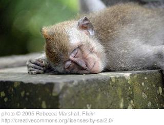 scimmia che dorme