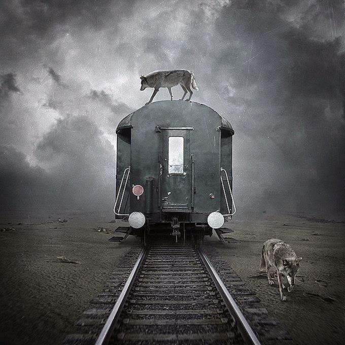 15 Amazing Surreal Animal Photographs by Sarolta Ban