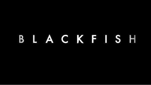 Documentário e livro podem tornar shows com orcas proibidos na Califórnia