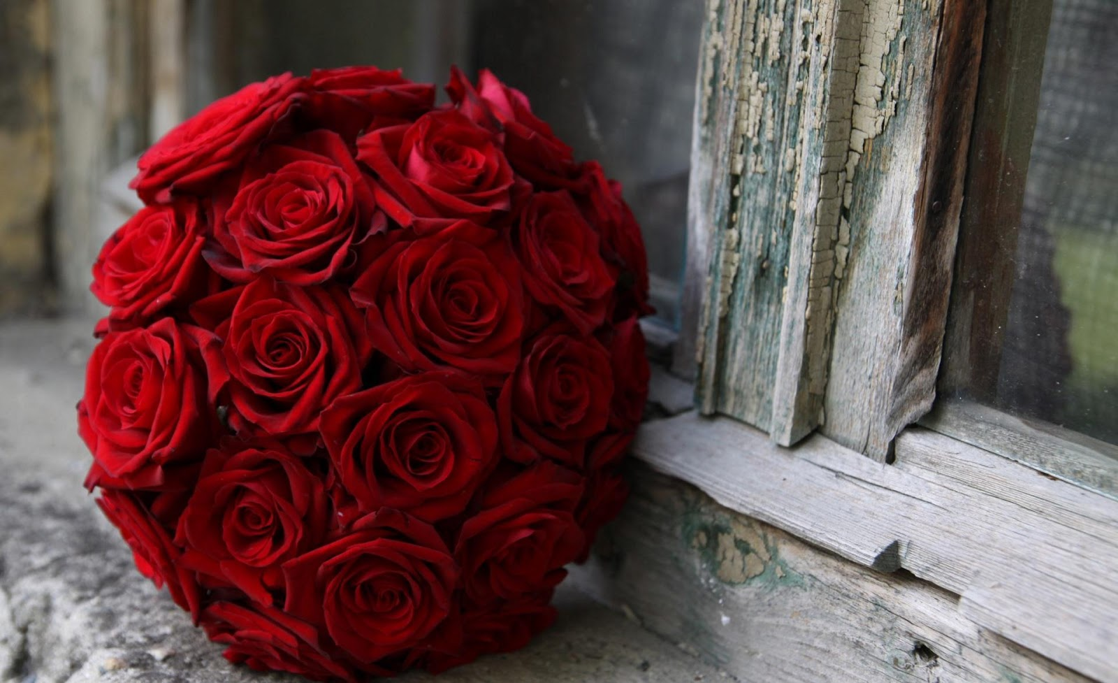 Red roses flower beautiful red rose wallpaper angelic hugs rose wallpapers red rose desktop wallpapers red rose desktop backgrounds images photos pics and pictures in the category of flowers wallpapers izmirmasajfo
