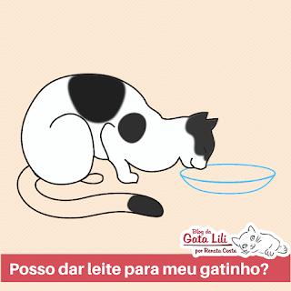 Posso dar leite para meu gatinho? Imagem de ilustração