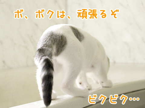 風呂場で遊ぶ子猫