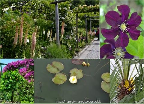 Marygi una giornata speciale for Laghetti nei giardini