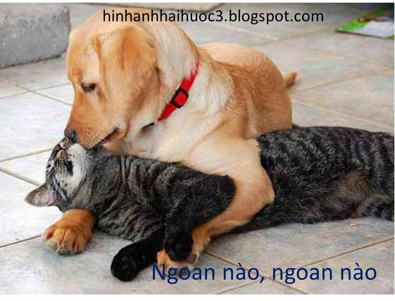 Hình ảnh hài hước về chó mèo