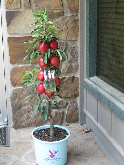 Garden musings from memphis area master gardeners urban for Garden trees memphis