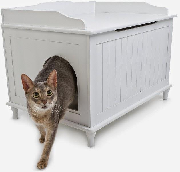Top Quando la lettiera del gatto puzza - Pets Life SZ95