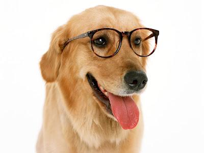 Funny Wallpaper Web Dog