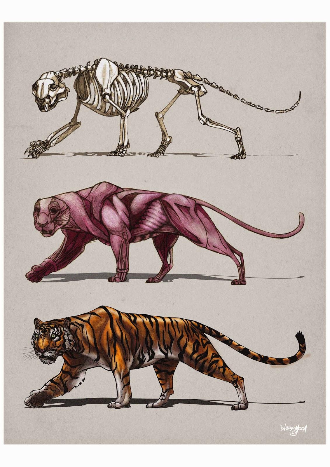 Bear and bigcats anatomy