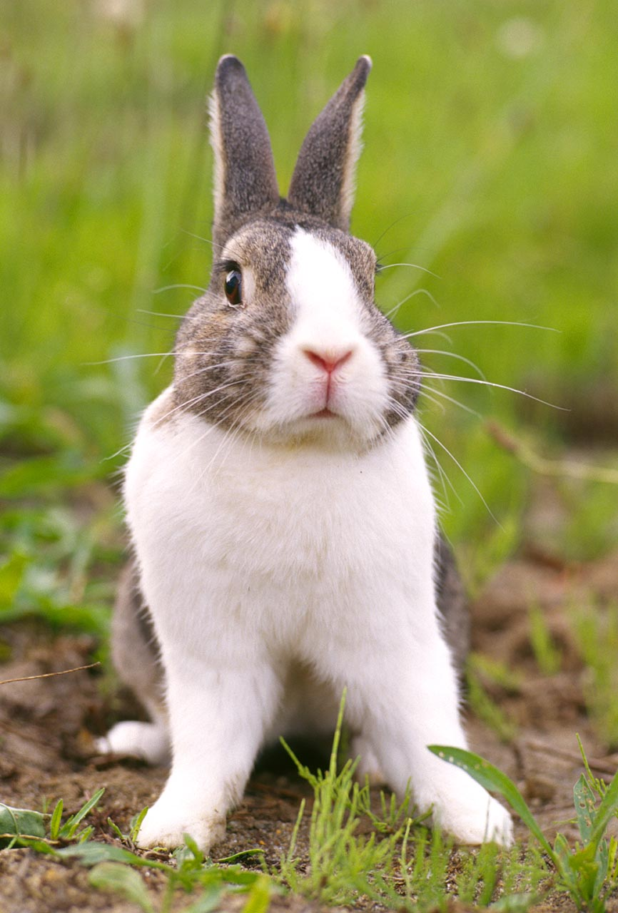pet rabbit images funny animal