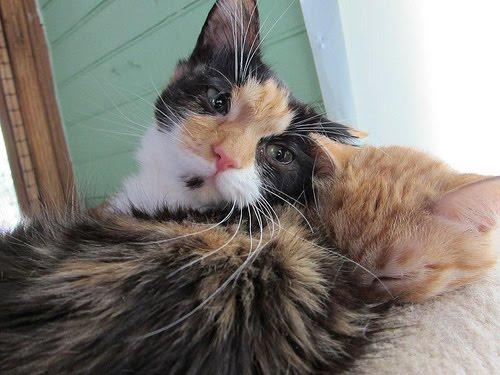ellen degeneres cat video