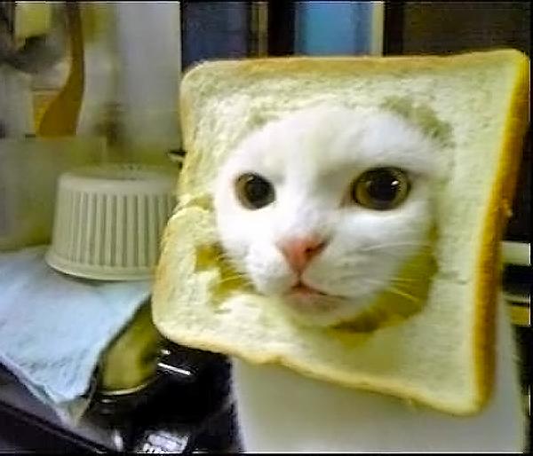 inbred animals - photo #11