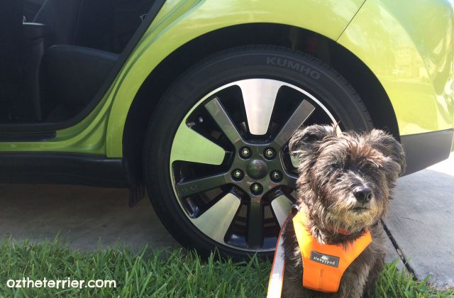 "Oz the Terrier shows off 18"" alloy wheels on 2015 Kia Soul ! (Exclaim)"