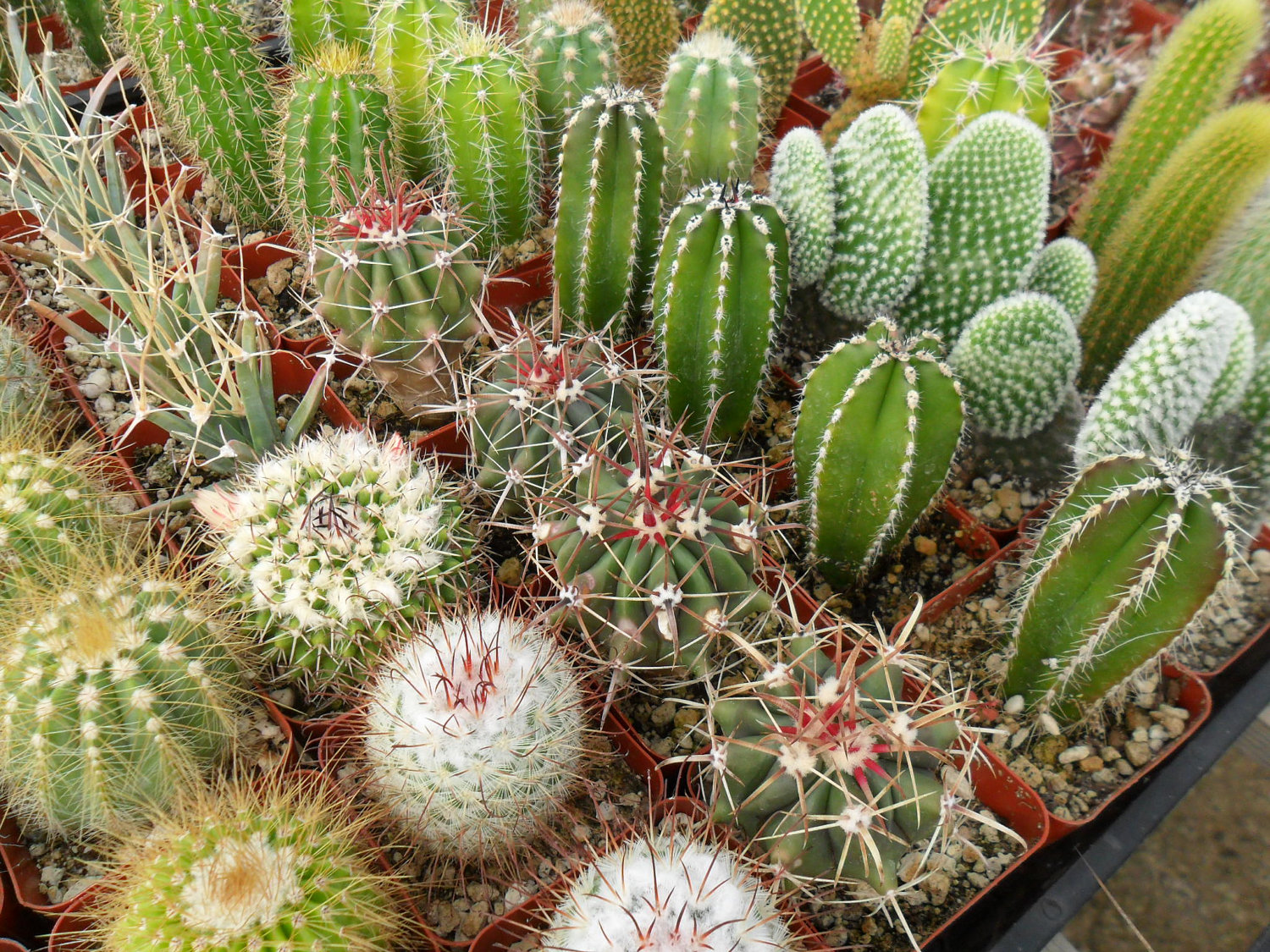 Succulents plants sydney add a unique touch to your - What is cactus plant good for ...