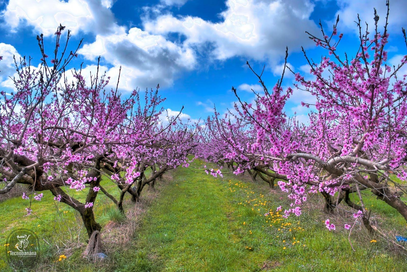Verdi orizzonti novembre 2011 for Immagini desktop primavera