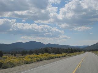 Blooming rabbitbrush along CA 168 near Westgard Pass, Eastern Sierras, California