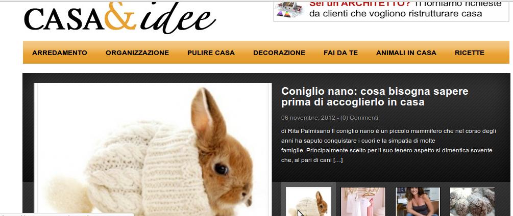 La vetrina arcobaleno coniglio nano cosa bisogna sapere prima di accoglierlo in casa - Cosa sapere prima di comprare casa ...