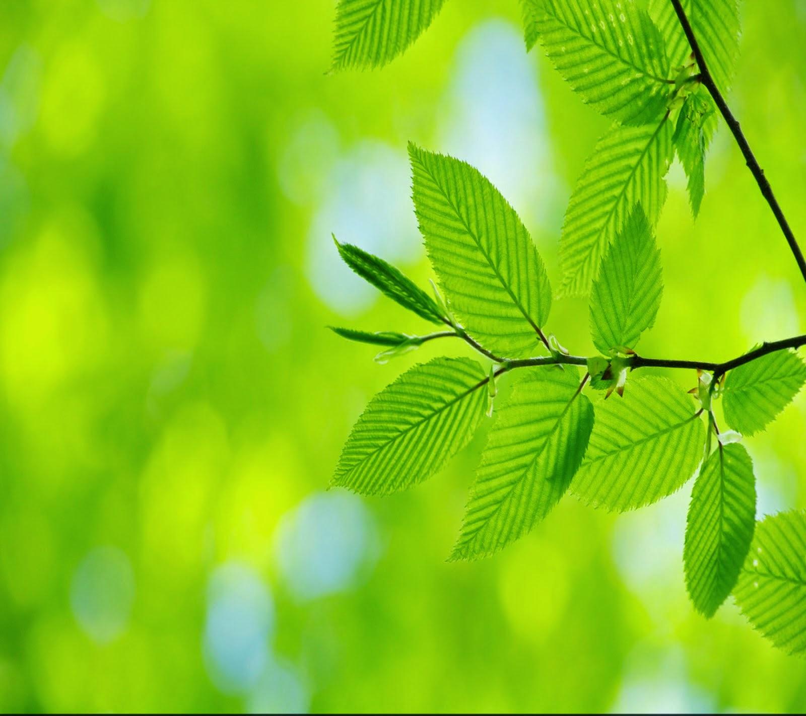 ENERGY WORKER  - CLEAR YOUR AURA - ENERGY HEALER - spirit coach