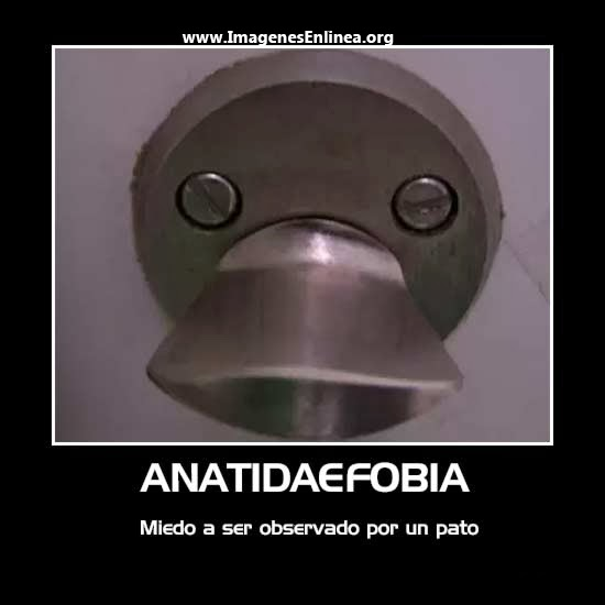 Anatidaefobia, miedo a ser observado por un pato...