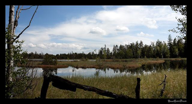 Wildsee im Kaltenbronner Moor