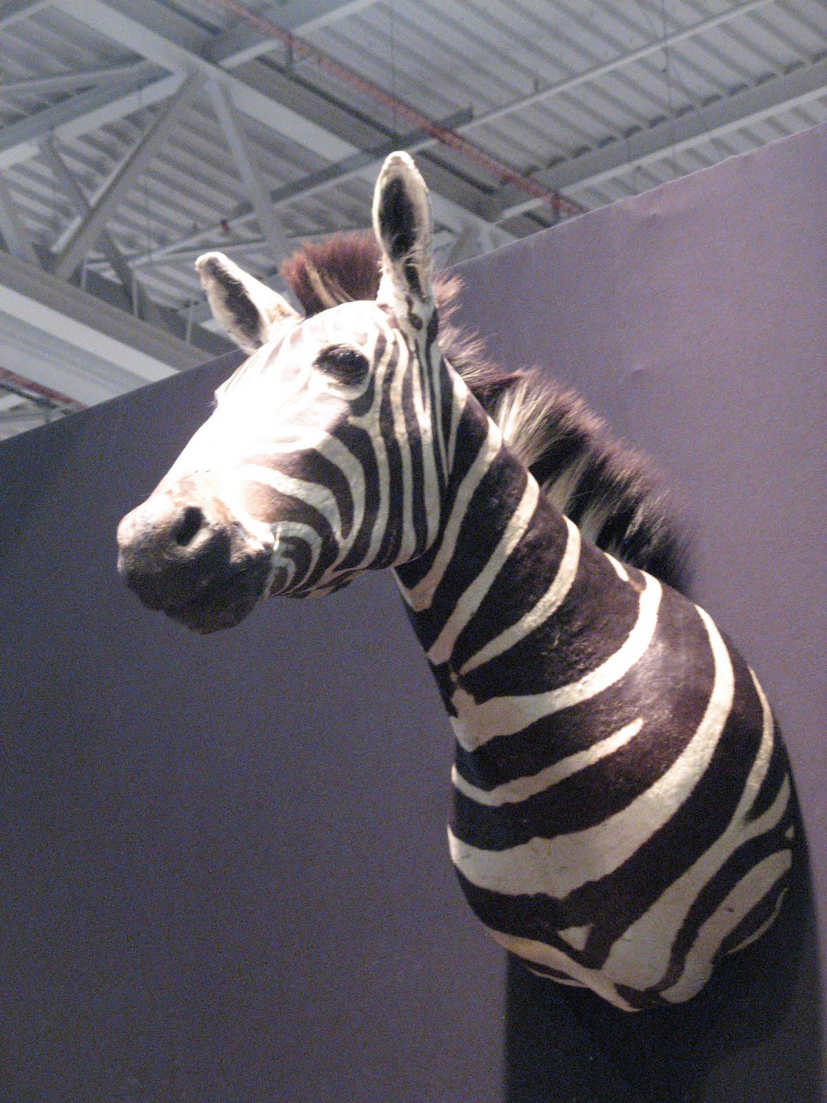 D co les incontournables de flo deco animaux tranquilles for Deco zebre