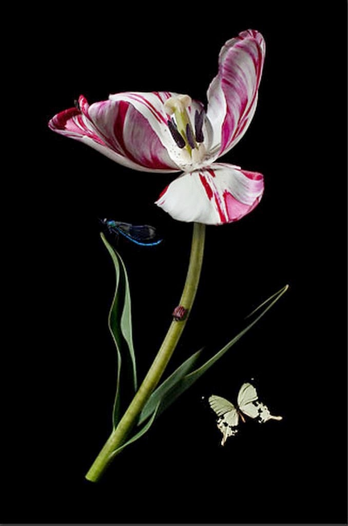 cuadros-de-flores-y-mariposas-fotos