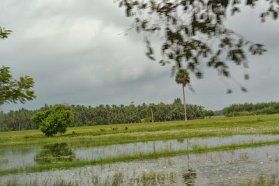 Flooded field on the way to chilika lake