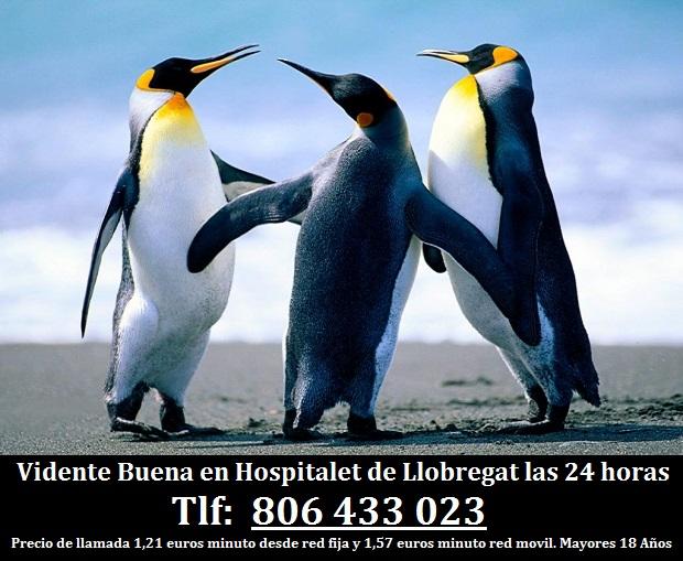 Vidente Buena en Hospitalet de Llobregat las 24 horas